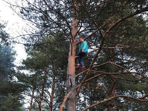 дерево Киржач